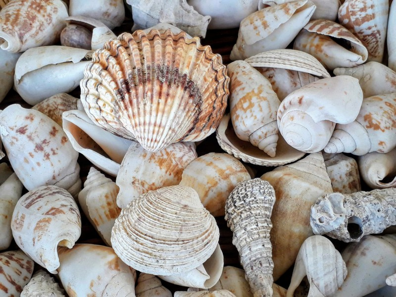 Can Seashells Fight Climate Change?